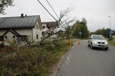 FJERNES: Om kort tid vil uteseksjonen i Nesodden kommune fjerne dette treet. FOTO: Ole Jonny Johansen