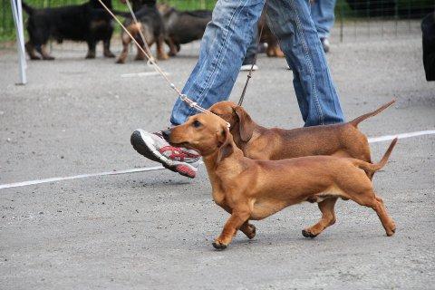 Begrens nærkontakt med andre hunder, er et av rådene fra veterinærer etter at flere hunder er døde.