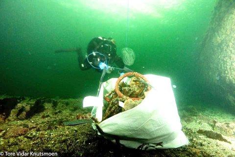 SEKKENE: Her er folk fra Drøbak dykkerklubb i aksjon på havets bunn for å plukke søppel folk har kastet i vannet utenfor Badeparken. FOTO: Tore Vidar Knutsmoen