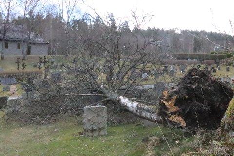 Et svært tre har falt over gravlunden i Kolbotn 2. påskedag. FOTO: Anders Nordheim Dahl