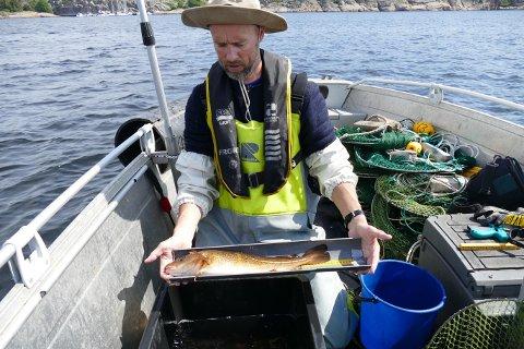 FORSKER: Even Moland måler torsk i prosjektet «Krafttak for kysttorsken».