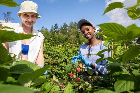 EN SMAKFULL SOMMERJOBB: Thea Brusevold og Nancy Nicole Makokha stortrives med innhøsting ved Bringebærlandet.