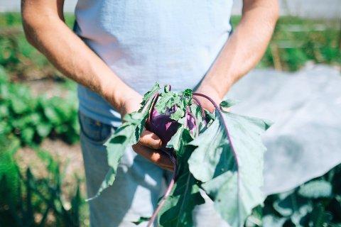På Vaar gård finner du smaken av Nesodden. Økologisk, biodynamisk, kortreist...