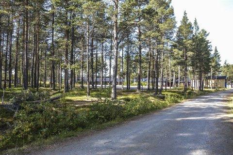 BARNEHAGE: I dette skogholtet sør for ungdomsskolen på Os, innstilles det overfor kommunestyret til bygging av ny barnehage på Os.