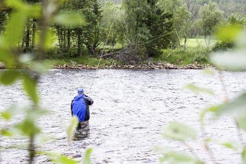 SOM I FJOR: Gaula Natursenter opplyser at laksefisket i år har vært veldig likt i forhold til tallene fra i fjor. Det må fiskes cirka 1.000 fisk nå i august for å oppnå samme tall som i fjor. Arkivfoto