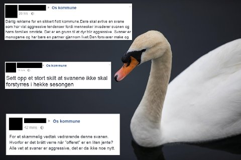 En illsint svane skaper Facebook-trøbbel for Os i Hedmark. Problemet er bare det at «Havnesjefen» egentlig befant seg i en helt annen kommune. Nemlig Os i Hordaland.