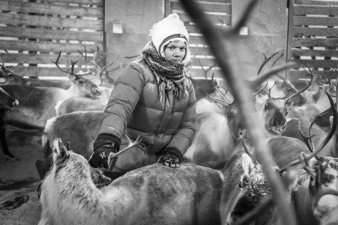 Eiva Krihke Jonassen født 1991. De to sørsamiske reinbeitedistriktene Saanti Sijte og Gåbrien Sijte samarbeider om den årlige vinterslaktingen ved Harsjøen øst for Røros. Deretter drives flokkene til felles vinterbeiter ved Femunden.
