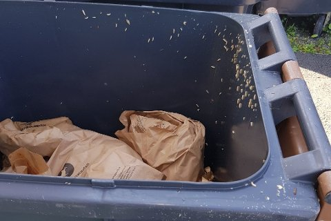 EKKELT: Med enkle grep kan du unngå larver i søppeldunken. Follo Ren anbefaler bruk av plastsekker og ikke papirposer, som på bildet.