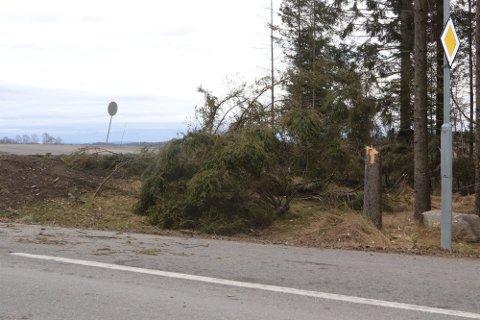 TREFELLING: Ved krysset Krorveien/Stønerudveien i Ås har noen ungdommer felt en rekke trær med motorsag. Trærne er nå fjernet fra veien.