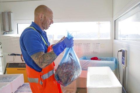 Gode fangster: Fiskehandler Espen Viddefjell veier inn de siste kassene med reker fra tråleren «Ero» som losset i går tidlig. foto: stig sandmo