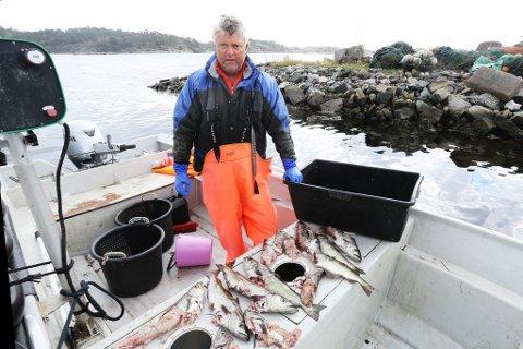 Her er noen av lyren som fikser Geir Larsen fikk i garnet. Selen har spist på fiskene og etterlatt hoder og halve fisk. - Selen tar bare godbitene på fisken, sier Larsen.