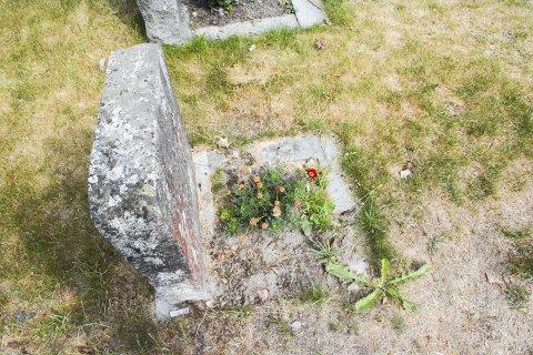 TØRT: Flere gravplasser i Risør preges av det tørre og varme været vi har hatt den siste måneden.FOTO: Mari Nymoen