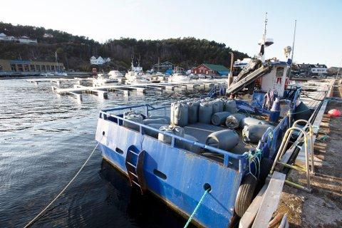 """Ved moloen i Buvika har redskapsbåten """"Stolt Draco"""" ligget fortøyd siden i fjor. Selskapet Agder Mussels har skakkjørt økonomi og ingen ansatte."""