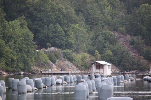 BRAKK: Blåskjellanlegga i Sørfjorden ligger der fortsatt - og til mandag skal egentlig eieren, Agder Mussels, ha fjernet alt. Det skjer ikke.
