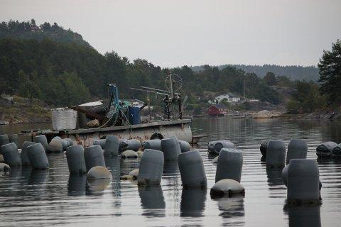 BØTER: Nå illegges Agder Mussels dagsbøter fra Fiskeridirketoratet, da de har 15 anlegg i Risør, Tvedestrand og Arendal som har ligget brakk i en årrekke. Dette bildet er tatt høsten 2020, og viser anlegget i Kranfjorden.