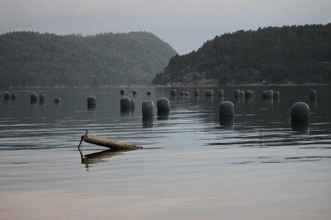 Et av Agder Mussels' forlatte blåskjellanlegg i Nordfjorden i august 2020. Nå har selskapet meldt oppbud.