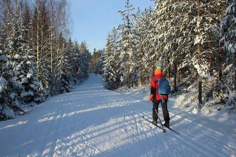 I helgen er det bare å ta frem skia og komme seg på tur, for i Gjerstad og Risør er det meldt strålende sol og rundt 0 grader på det varmeste.