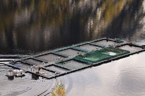 OPPDRETTSANLEGG: Norsk Ørret AS trenger mer fisk i anlegget sitt i Sirdalsvannet enn lokale settefiskanlegg kan levere. Derfor ønsker de å etablere eget anlegg ved Ertsmyra.