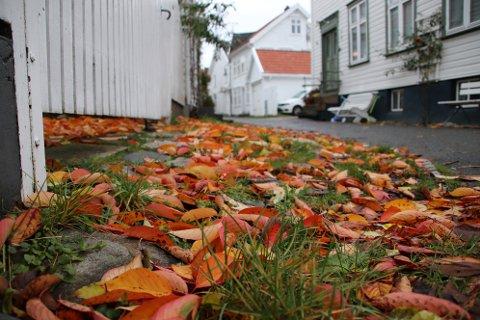 ET UTVALG: Kommunerevisjonen skal sjekke et utvalg av Flekkefjord kommune sine husleiekontrakter for å se om kommunen følger opp sin rolle som utleier.