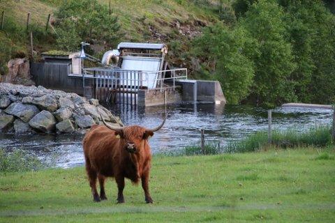 GRØNT JORDBRUK: Fornybar kraft i form av småkraft og jordbruk side om side på Oftedal i Sirdal.