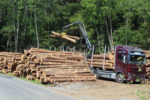 GOD SATSING: I Kvinesdal, Flekkefjord og Farsund var det tatt ut i alt 33.615 kubikkmeter tømmer pr. 31. mai. Foto: Roy Harbakk