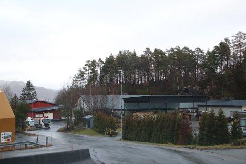 NY INDUSTRITOMT: Skogen og knausen på 8-9 mål ovenfor IPC Industrirør skal bli industritomt for både IPS og LH Anlegg AS.