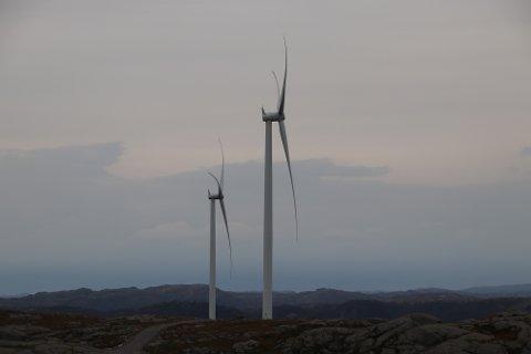 UNDERSØKELSER: Nå skal det gjøres etterundersøkelser for hubro og trekkende rovfugl i vindkraftverk langs kysten av Agder og Rogaland.