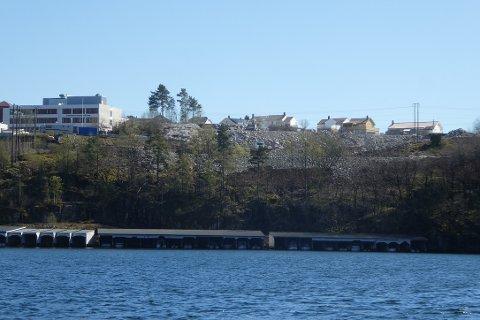 HAVNET UTENFOR: Noe av steinmassene for P-plassen nord for tomten til den nye flerbrukshallen på Uenes havnet i strandsonen utenfor regulert område uten at det er søkt dispensasjon.