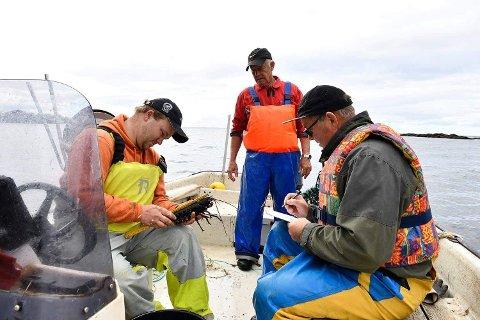 MÅLT: Hummerne som ble fisket ble målt og registrert.