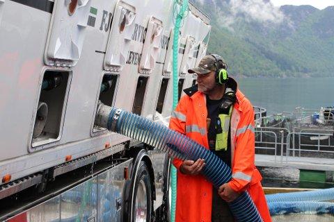 SETTEFISK: Svein Kåre Blom styrer slangen fra Fjordservice transport AS der 25.000 ørret med en vekt på om lag 100 gram pr. stk. skal ut i Sirdalsvatnet. Fisken er klekket i Gyland, men må via en oppvekstperiode i Tyssen kommune før den havner i Sirdalsvatnet. I løpet av ca et halvt år får ørreten en vekt på 500 gram og er attraktiv for en del av de norske og øst-europeiske kundene. Noen vil gjerne ha fisken større. Da leveres den etter om lag ett år i Sirdalsvatnet og har fått en vekt på om lag 1,5 kilo.