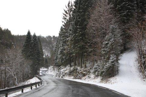 LIKE VED VEIEN: Mye av skogen der det skal hogges tømmer ligger på høyre side av fylkesvei 469 like før avkjøringen til Erikstemmen når man kommer fra Flekkefjord.