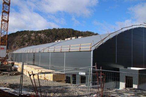 STOR TAKFLATE: Med den store takflaten vendt mot sør vil den nye flerbrukshallen på Uenes være ideell for produksjon av strøm fra solcellepanel. Arbeidet kunne vært gjort samtidig med takarbeidene som nå gjøres, men det politiske flertallet har bestemt at 2021 skal brukes til å utrede bruk av solceller.