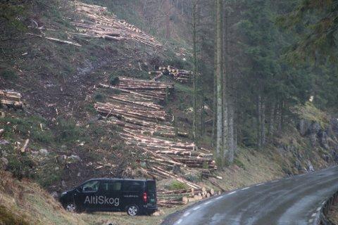 KORT PROSESS: I løpet av kort tid har nesten hele skogen blitt omgjort til tømmerstokker som igjen skal bli til materialer i Tyskland.