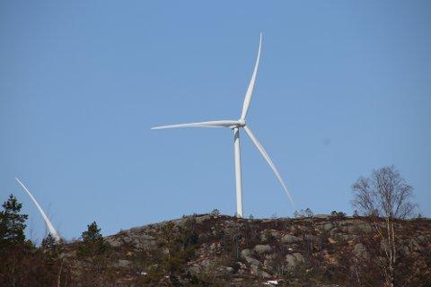 SAMKJØRING: Norges Vassdrags- og energidirektorat (NVE) ber statsforvalteren i Agder å svare på om det er OK at vindkraftverkene på Buheii og Tonstadheia kan samkjøre tiltak for å ivareta hubro med det som Statsforvalteren og Agder Energi Nett nå arbeider med.