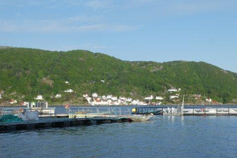 BREIDLIBUKT:  Verneområdestyret viser til at området utenfor Rasvåg, der Nekkar har sin testmerd og Hidra fiskemottak AS ønsker torskelagring ble brukt til oppdrett i langt større skala da verneområdet ble innført.