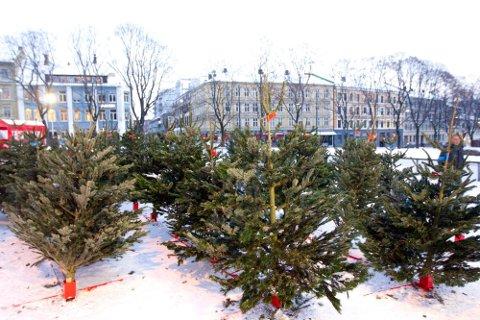 DU GRØNNE, GLITRENDE: Over 90 prosent av norske hjem skal nå ha et juletre inn i stua, men prisene varierer stort rundt om i landet. Fortsatt velger de fleste et ekte tre, men flere velger også plast.  Foto: Morten Holm (NTB scanpix)