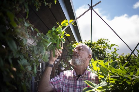 OASE: På Galgeberg har Jan Ketil Ryggvik skapt en frodig oase. Her kan han forsyne seg med mengder av egendyrkede bær, grønnsaker og urter.