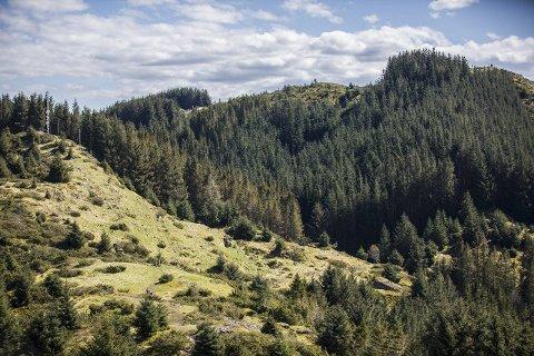 DYRDALEN: Opp mot toppen frå Dyrdalen kan ein velja å gå gjennom skogen eller stien utanfor, litt lenger vest.