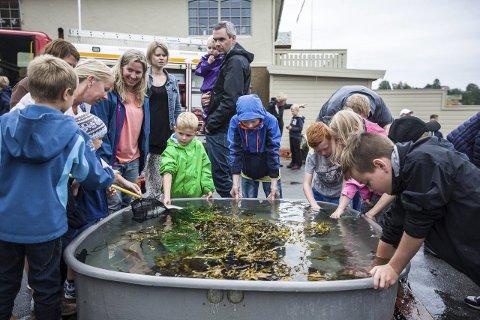 SPENNANDE: I store vasskar kunne borna utforska livet i fjæra, og få nærkontakt med fisk og krabbar.
