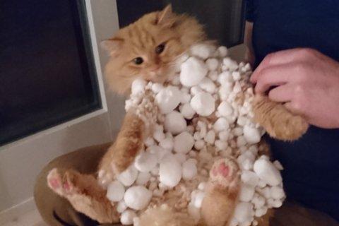 Slik såg Katten Leon ut etter to timar i snøen.