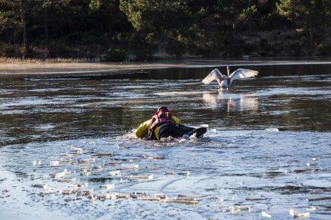 Brannmannen Samir fekk i oppdrag å få svanen fri frå isen.