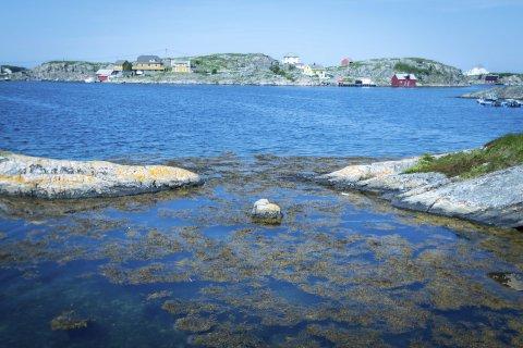 FISKEFESTIVAL: Lørdag er det fiskefestival på øya i havgapet. FOTO: Yngve Garen Svardal