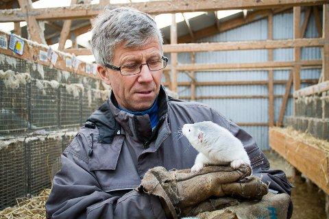 Normann Grimen driv den 61 år gamle minkfarmen på Byrknesøy i Gulen. Han fryktar no for framtida si.