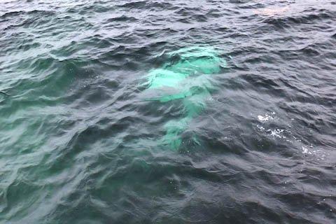 UNDER ETTERFORSKING: Her er bilen som hamna i sjøen inne på anlegget til Mongstad Equinor.