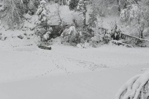 Her ligger kanoen nabo Arve Lyngbø oppdaget. Mandag ettermiddag ble Kurt Oddekalv funnet omkommet i vannet.