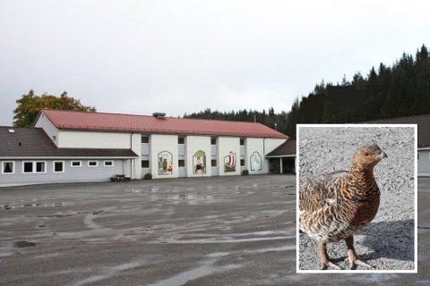 BESØK: Både Kløvheim skule og Barnas barnehage har fått besøk av denne orrhøna denne veka.