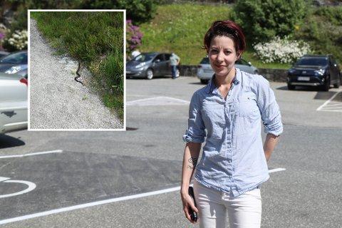 Therese Vatnelid Lohne var rask med å ta opp mobilkameraet då ho såg ein hoggorm i Brekkeløypa denne veka.