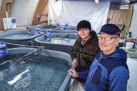 Barnerommet: Her svømmer tusenvis av tre uker gamle fiskebarn, som om rundt tre år skal levere verdifull kaviar til restauranter. Marinbiolog Domika Clarke og daglig leder i Polarfisk AS kan etter hvert få selskap av rundt 30 ansatte i Meløy.Alle bilder: Johan Votvik