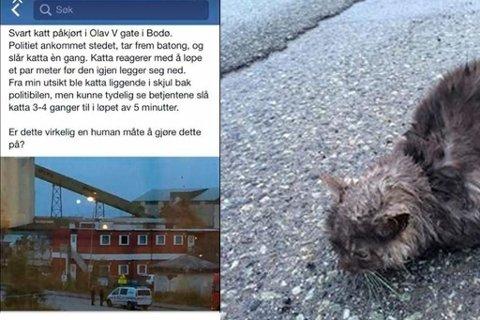 PÅKJØRT: Denne påkjørte katten ble avlivet av politiet. Foto: Privat