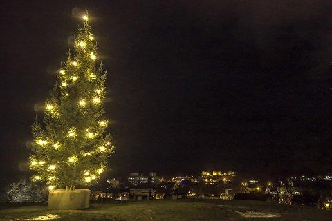 På jakt etter julegran: Bildet er av fjorårets julegran på toppen av Rensåsen, men i denne omgang er det Fauske kommune og Fauske som er på jakt etter årets julegran.